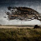 Cuckmere Tree by JayteaUK