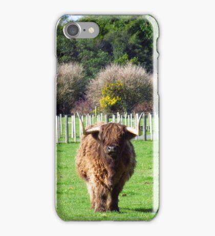 Bull in a farm iPhone Case/Skin