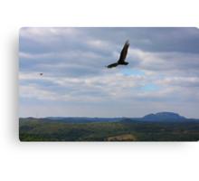 Turkey Vulture Landscape........ Canvas Print