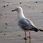 Seagull by Christeen Thornton