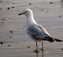 Seagull by smileyfaces