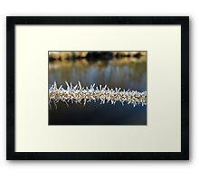 Icy Stem Framed Print