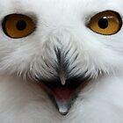 Snowy Owl Close Up by lloydsjourney