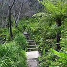 Leura Cascades Circuit Walk - Blue Mountains by Marilyn Harris