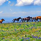 Wild Mustangs by Bob Melgar