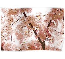 Pink Cherry Blossoms - Impressions Of Spring Poster