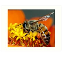For the Hive Art Print