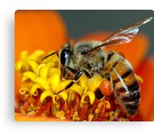 For the Hive Canvas Print