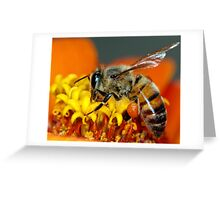 For the Hive Greeting Card
