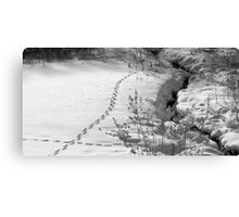 Tracks on the Morning After Canvas Print