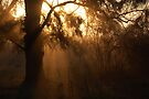 Moody Sun Rays by Denis Marsili - DDTK