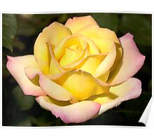 Yellow Rose of Texas Poster