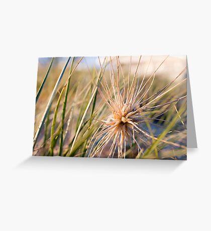 Beach Plant Greeting Card