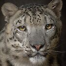 Snow Leopard by Cheri  McEachin