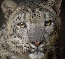 Snow Leopard by Cheri  McEachin