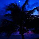 Purple Palm Tree by DavidCThomson