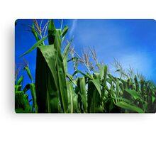 Corn Field In Blue Sky Metal Print