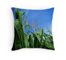 Corn Field In Blue Sky Throw Pillow