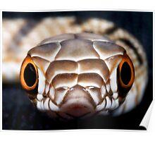 Bull Snake! Poster