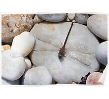 Dragonfly on pebble Poster