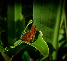 Butterfly enwraped in nature by Joshua Rablin