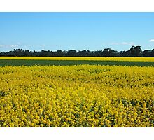 Golden Fields and Sky Photographic Print