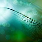 Emerald Damselfly  by ╰⊰✿Sue✿⊱╮ Nueckel