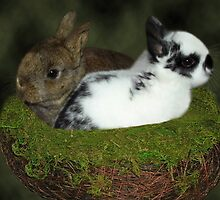 DWARF RABBITS PICTURE  by ✿✿ Bonita ✿✿ ђєℓℓσ