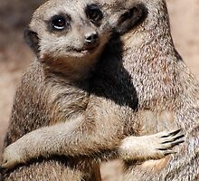 Hugging Meerkats by LizzieMorrison