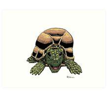 Happy Tortoise Art Print