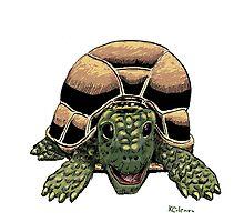 Happy Tortoise by Ken Coleman