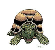 Happy Tortoise Photographic Print