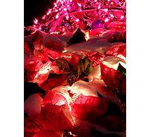 A Little Bit of Big Christmas Tree Photographic Print