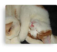 Cutie Cats Canvas Print