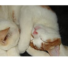 Cutie Cats Photographic Print
