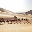Camels in the Sahara by Peter Hammer