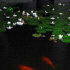 Carp in the Night by Limitlessonline