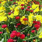 The lavish colors of spring by Ana Belaj