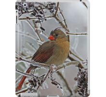 Cardinal on Icy Branches iPad Case/Skin
