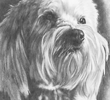 Schnoodle by BarbBarcikKeith
