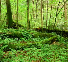 The Fallen Covered in Moss by Lisa Taylor