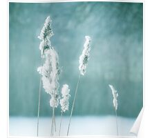 Soft winter reed Poster