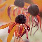 Echinacea red by RosiLorz