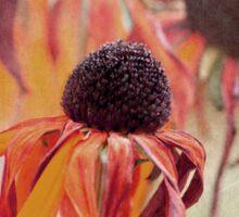 Echinacea red Sticker