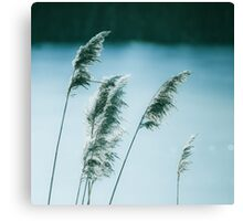 Windy winter reed Canvas Print
