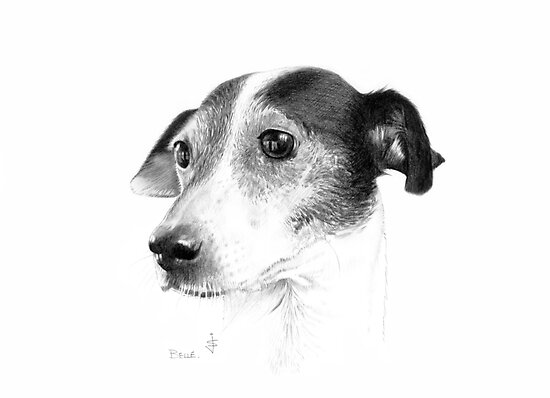 Dog Pencil Sketch - Old Belle by Jan Szymczuk