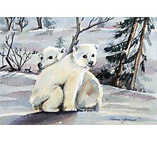 Polar Cubs Photographic Print