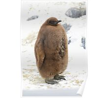 The King Penguin Chick Poster