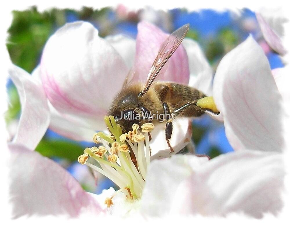 Bee Heaven by JuliaWright
