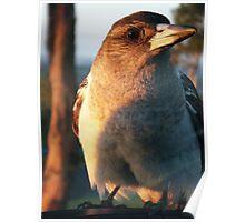 Baby Butcher Bird Poster